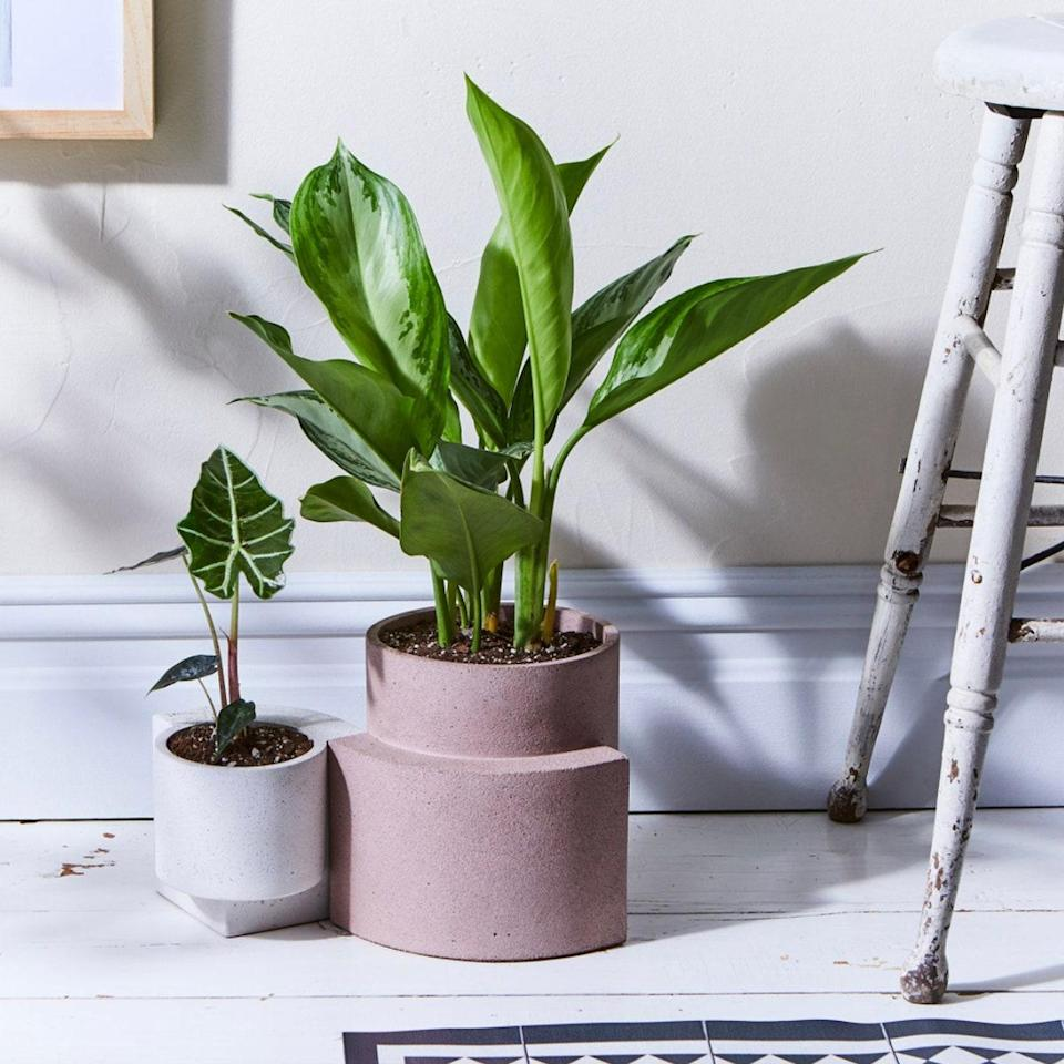 "I've brought a lot of new <a href=""https://www.glamour.com/story/best-plants-for-bedroom?mbid=synd_yahoo_rss"" rel=""nofollow noopener"" target=""_blank"" data-ylk=""slk:(plant) life"" class=""link rapid-noclick-resp"">(plant) life</a> into my home this year and I love this chic, sculptural planter. It looks good on my fire escape, coffee table, floor—anywhere. And it's sturdy enough that my cat can't knock it over. —<em>S.O.</em> $60, Food52. <a href=""https://food52.com/shop/products/7568-modern-terrazzo-platform-planters"" rel=""nofollow noopener"" target=""_blank"" data-ylk=""slk:Get it now!"" class=""link rapid-noclick-resp"">Get it now!</a>"