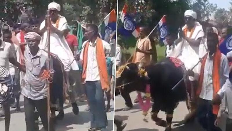 Bihar Assembly Elections 2020: Candidate From Patna's Paliganj Takes Out Rally on 'Bull' Before Filing Nomination (Watch Video)