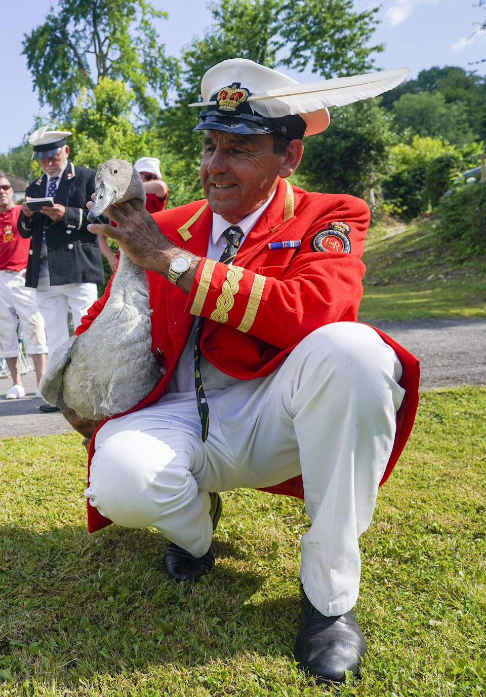 David Barber inspects a swan (Steve Parsons/PA) (PA Wire)
