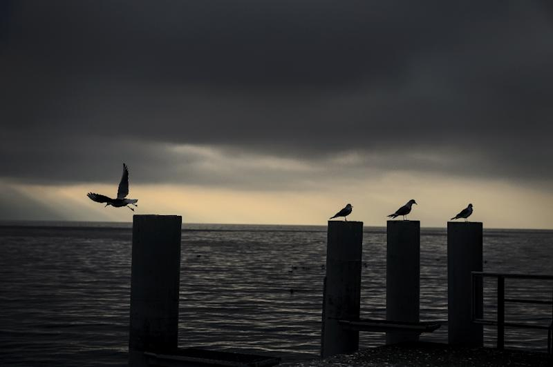 Seagulls on the edge of Lake Geneva, near where English comic actor and filmmaker Charlie Chaplin would come to feed the birds (AFP Photo/Fabrice Coffrini)