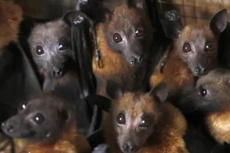 Close relatives of SARS-CoV-2 circulating undetected in bats for decades