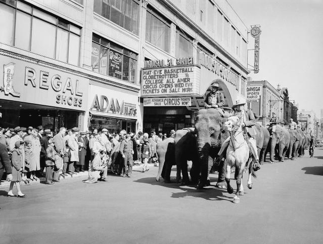 <p>Arkie Scott astride his horse, Harold, leads a parade of elephants down Eighth Avenue at Madison Square Garden in New York, March 28, 1954. The Ringling Brothers and Barnum and Bailey Circus came to town for a 40-Day engagement. (AP Photo/Jacob Harris) </p>