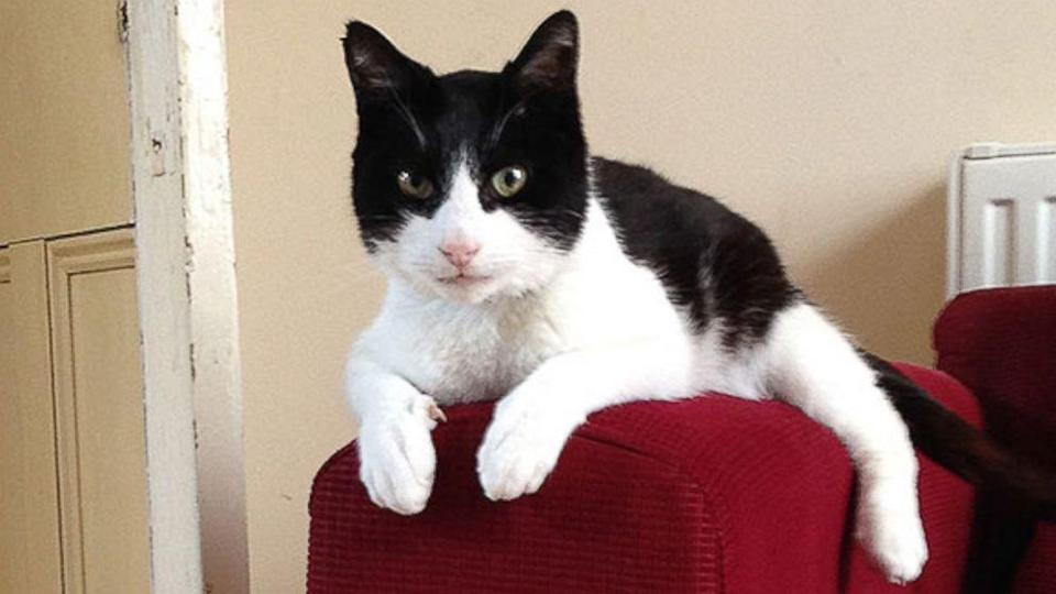 Merlin the Cat Sets New World Record for Loudest Purr (ABC News)