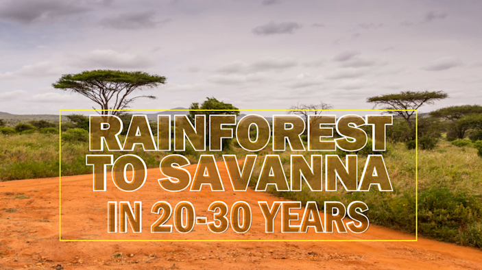 Some experts believe most of the Amazon rainforest could transition to drier savanna in just a few decades if we keep deforesting and warming. / Credit: CBS News