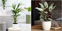 "<p><strong>From small desktop ferns to statement palms, there are plenty of non-toxic, dog-friendly <a href=""https://www.housebeautiful.com/uk/garden/plants/g34571764/trending-houseplants/"" rel=""nofollow noopener"" target=""_blank"" data-ylk=""slk:plants"" class=""link rapid-noclick-resp"">plants</a> that are safe for pet owners to have on display at home. </strong></p><p>If you're a dog owner looking for plants to buy, it's important to consider whether they are harmful to your pooch. Some <a href=""https://www.housebeautiful.com/uk/garden/plants/g33306866/toxic-plants/"" rel=""nofollow noopener"" target=""_blank"" data-ylk=""slk:toxic houseplants"" class=""link rapid-noclick-resp"">toxic houseplants</a> to be wary of include the Devils Ivy, Peace Lily and Sago Palm. They might look beautiful placed on your coffee table, but these species should be kept away from pets and young children.</p><p>In order to help you find the perfect dog-friendly plants, the team at <a href=""https://go.redirectingat.com?id=127X1599956&url=https%3A%2F%2Ftails.com%2Fgb%2F&sref=https%3A%2F%2Fwww.housebeautiful.com%2Fuk%2Fgarden%2Fplants%2Fg35160955%2Fdog-friendly-plants%2F"" rel=""nofollow noopener"" target=""_blank"" data-ylk=""slk:Tails.com"" class=""link rapid-noclick-resp"">Tails.com</a> have shared their top picks to help you create your very own indoor jungle...</p>"