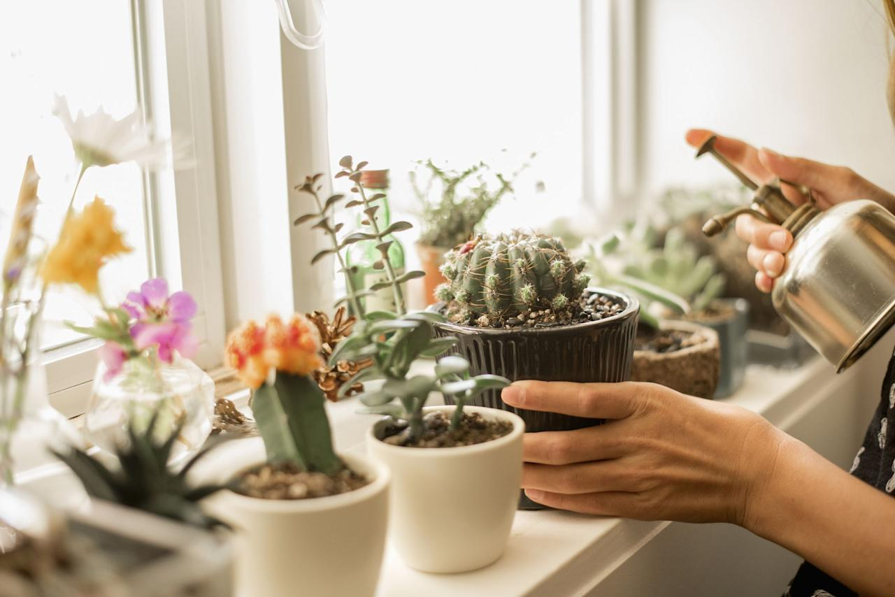 "<p>If you've been feeling the call to make like <a href=""https://www.countryliving.com/life/entertainment/a26815392/joanna-gainess-favorite-flower-roses/"" target=""_blank"">Joanna Gaines</a> and embrace your inner ""crazy plant lady,"" an indoor cactus or succulent garden is a great place to start. Did you know all cacti are <a href=""https://www.countryliving.com/gardening/a42264/how-to-grow-succulents/"" target=""_blank"">succulents</a> but not all succulents are cacti? All succulents store water in their stem or foliage, but cacti also feature areoles, the little bumps on the outside of the plant that the spines grow from. With the proper care, these desert-native plants can be just as happy growing on a shelf <a href=""https://www.countryliving.com/gardening/garden-ideas/g26829528/bedroom-plants/"" target=""_blank"">inside your home</a>. A cactus requires little care—it can even <a href=""https://www.countryliving.com/gardening/garden-ideas/g27092607/low-maintenance-flowers/"" target=""_blank"">tolerate some neglect</a> as some types only need to be watered every two to three months. They can live for decades, so even the black-thumbed among us can find success.  <a href=""https://www.countryliving.com/gardening/garden-ideas/a26265781/cactus-garden/"" target=""_blank"">Our list of best cactus garden tips</a> answers all of your questions on soil, containers, and watering. Cacti come in all shapes and sizes, and some even boast brightly colored flowers. Ready to up your <a href=""https://www.countryliving.com/gardening/g26753835/indoor-trees/"" target=""_blank"">houseplant game</a> with some less-prickly selections? Branch out with these choices.</p>"