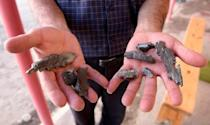A man shows an artillery shell fragments in a village in the Tovuz district of Azerbaijan