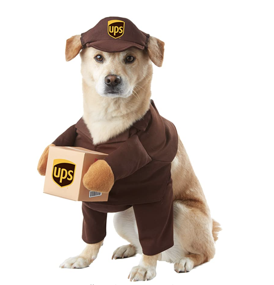 blonde puppy wearing brown California Costume Collection UPS Dog Outfit