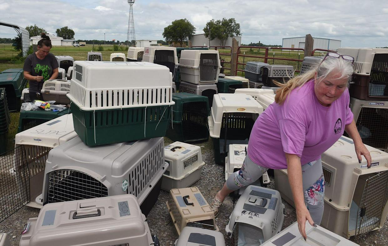 St. Landry Parish Animal Ward Director Stacey McKnight is preparing a kennel for 100+ dogs that will be transported by the Humane Society of the United States prior to Tropical Storm Barry.