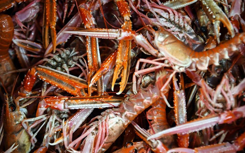FILES) In this file photo taken on December 16, 2020 Langoustines are seen as the crew of the trawler 'Good Fellowship' process the day's catch after berthing in Eyemouth Harbour in the Scottish Borders on December 16, 2020. - Brexit becomes a reality on December 31, 2020 as Britain leaves Europe's customs union and single market, ending nearly half a century of often turbulent ties with its closest neighbours. The UK's tortuous departure from the European Union takes full effect when Big Ben strikes 11:00 pm (2300 GMT) in central London, just as the European mainland ushers in 2021 at midnight. Brexit has dominated British politics since the country's narrow vote to leave the bloc in June 2016, opening deep political and social wounds that still remain raw. - Andy Buchanan/AFP via Getty Images
