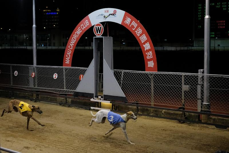Greyhounds pass the finishing line during the last greyhound race at the Macau Canidrome Club –– Asia's only legal greyhound racing track. Source: Getty / VCG