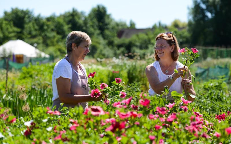 Join growers like Jo Wright and Wendy Paul of Organic Blooms, for weekend of knowledge, fun and skills - Organic Blooms