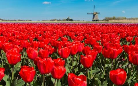 Keukenhof - Credit: Getty