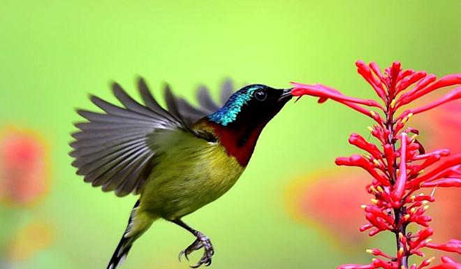 Campaigners say more work is needed to protect biodiversity. Photo: Xinhua