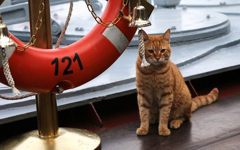 The cat - Russian Military of Defence