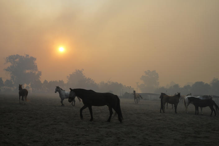 Horses are seen at a ranch as smoke fills the sky in Simi Valley, Calif., Oct. 30, 2019.  (Photo: Ringo H.W. Chiu/AP)