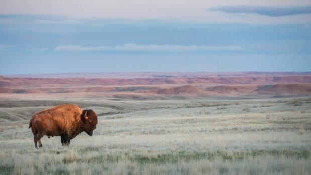 Agriculture, oil and gas development and other industrial development have claimed much of our original prairie ecosystems.
