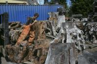 Steven Clark positions a piece of burl to be moved, at Redwood Burl Inc.'s warehouse in Arcata, California June 13, 2014. The shop procures old cut burls from private landowners. Picture taken June 13, 2014. REUTERS/Nick Adams (UNITED STATES - Tags: ENVIRONMENT BUSINESS)