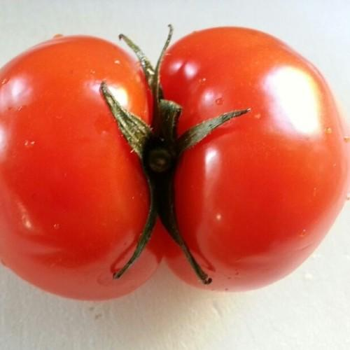 This tomatoe makes me uncomfortable. #random #fresh #tomatoe #weird #lookslikeabutt #instagood #bored