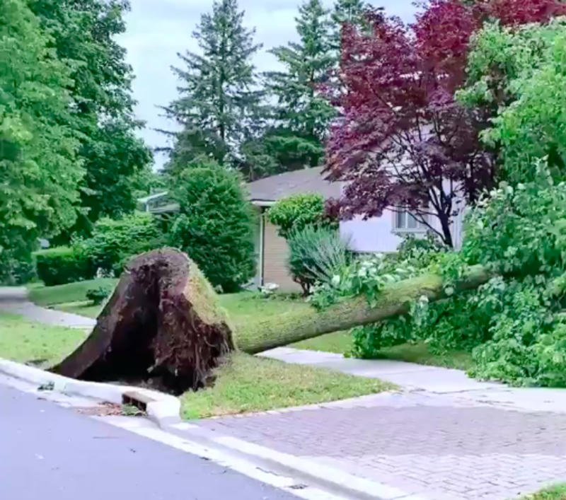 Major warning signs you're ignoring from your tree