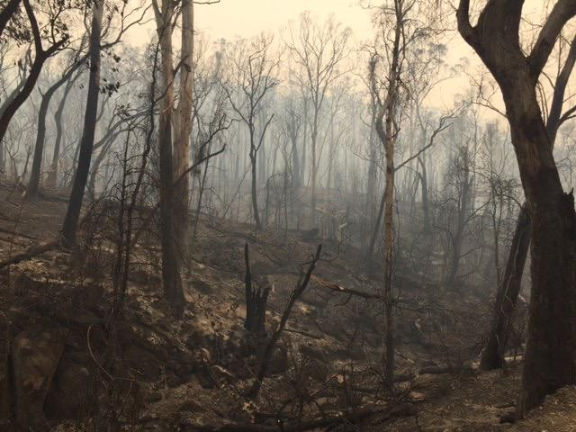 An eerie burnt out forest. Smoke in the background.