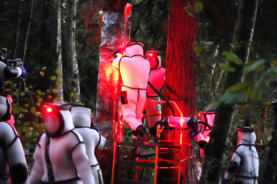 Washington State Department of Agriculture workers, wearing protective suits and working in pre-dawn darkness illuminated with red lamps, vacuum a nest of Asian giant hornets from a tree Saturday, Oct. 24, 2020, in Blaine, Wash. Scientists in Washington state discovered the first nest earlier in the week of so-called murder hornets in the United States and worked to wipe it out Saturday morning to protect native honeybees. (AP Photo/Elaine Thompson)