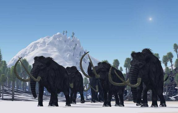 These dwarf mammoths were not woolly mammoths. Rather, the researchers suspect the beasts were more adapted to warmer environments, appearing more like modern African or Asian elephants, with a sparse covering of hair. They would've sported cur