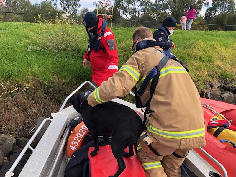 The Fire Rescue Victoria crew found Indy almost a kilometre away, still swimming and chasing ducks, so they picked her up and returned her to her owner. Source: Facebook/Fire Rescue Victoria