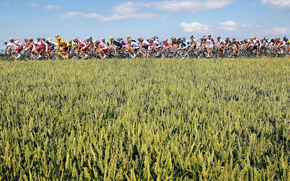 The peloton passing through wheat fields during stage 4 of a previous race - Getty