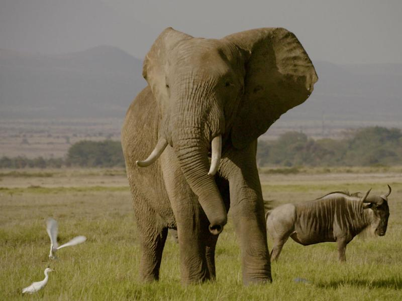 Twenty-thousand elephants a year are killed by poachers for their tusks