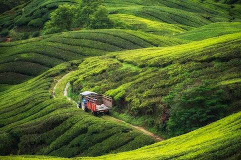 The Cameron Highlands - Credit: getty