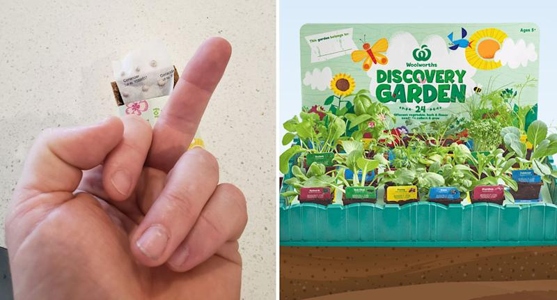 Man pulls finger at Woolworths Discovery Garden coriander seedling in show of disgust.