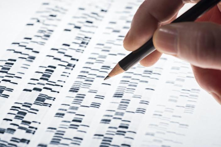 """<span class=""""caption"""">What could genomic medicine do in the future?</span> <span class=""""attribution""""><a class=""""link rapid-noclick-resp"""" href=""""https://www.shutterstock.com/image-photo/scientists-examined-dna-gel-that-used-251435335"""" rel=""""nofollow noopener"""" target=""""_blank"""" data-ylk=""""slk:DNA gel image via www.shutterstock.com."""">DNA gel image via www.shutterstock.com.</a></span>"""