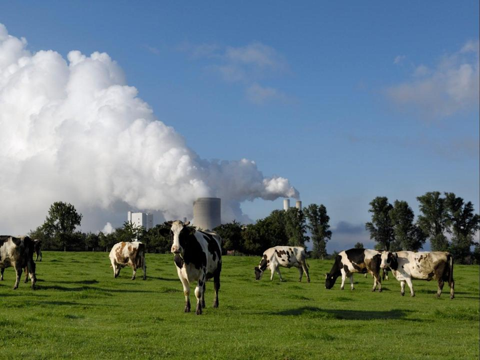 'Cows are the new coal', according to chair of FAIRR investment group Jeremy Coller (Getty )