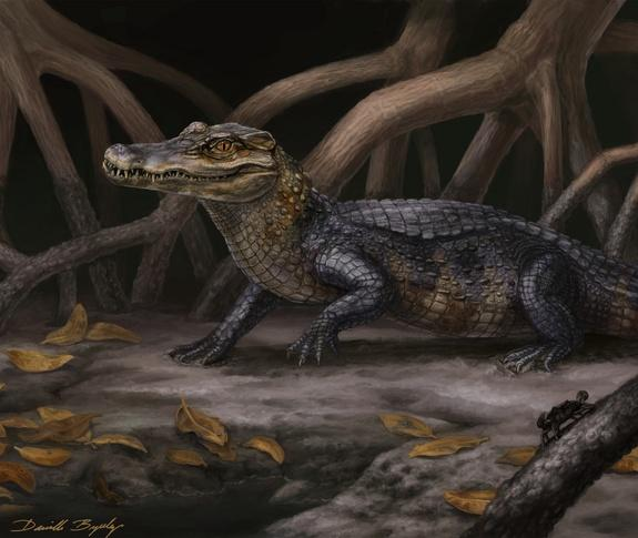Ancient Seaways Carried Alligators to South America