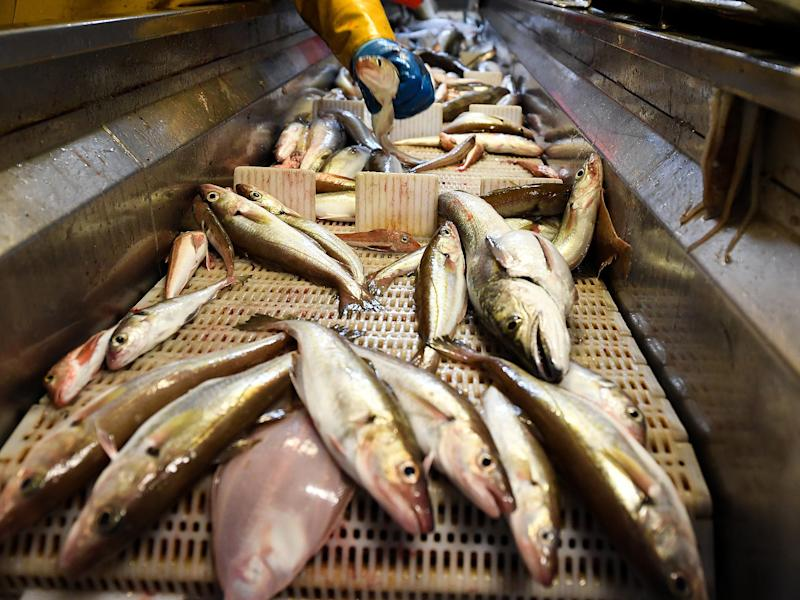 The UK fishing industry has been vocal throughout the negotiation of the draft Brexit agreement: Getty