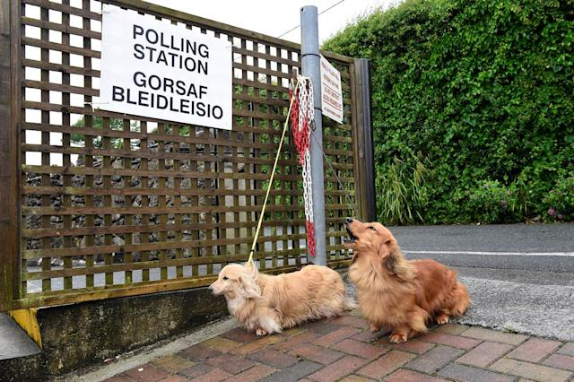 <p>Dogs wait for their owner outside a polling station in Penally, Wales, Britain, June 8, 2017. (Photo: Rebecca Naden/Reuters) </p>
