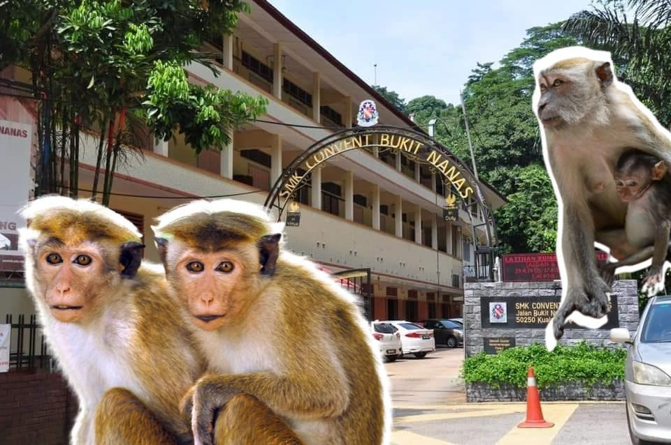 The exterior of CBN's secondary school, edited with photos of monkeys. Photo: Coconuts