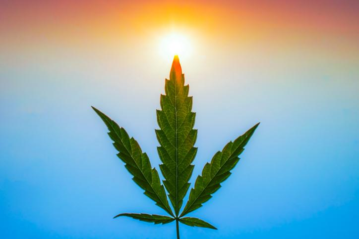 Cannabis leaf postioned vertically facing up with colors of the rainbow in background.