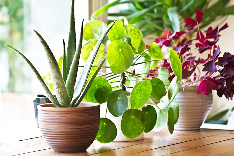 We're all spending a lot of time indoors at the moment and so adding some plants to your space could have huge benefits. (Getty Images)