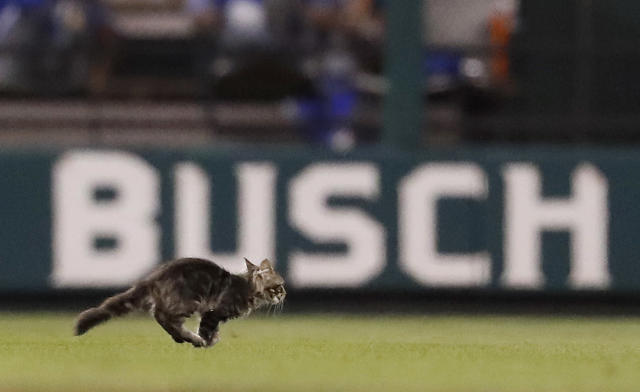 <p>A cat runs across the field at Busch Stadium during the sixth inning of a baseball game between the St. Louis Cardinals and the Kansas City Royals on Wednesday, Aug. 9, 2017, in St. Louis. (AP Photo/Jeff Roberson) </p>