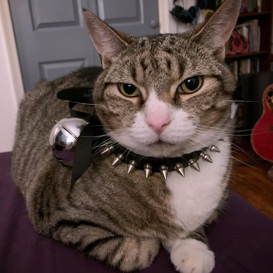 """This clever cat has learned to play the piano when he's hungry or when his litter tray needs changing. Winslow the seven year-year-old tabby was taught to play to counteract some bad behavior. """"He used to run around screaming all the time and I was like, 'this is no good',"""" said Winslow's owner Kate Nyx, 29, of Philadelphia. """"The piano is another way to communicate, so he's not screaming bloody murder."""""""