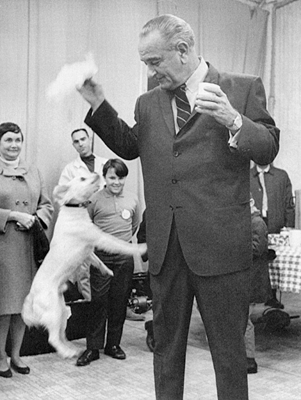 <p>Lyndon B. Johnson plays with his dog Yuki during a working vacation on his Texas ranch in 1968.</p>