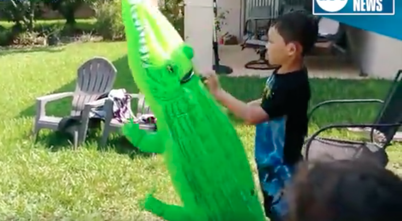 Real alligator shows up while boy plays with toy