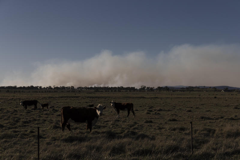 GLEN INNES, AUSTRALIA - NOVEMBER 10: Fire burns near the small town of Deepwater on November 10, 2019 in Glen Innes, Australia. Three people are confirmed dead with the death toll expected to rise and more than 150 homes have been destroyed as bushfires continue to burn across eastern Australia. Two people died in the fire in the Kangawalla area, near Glen Innes on the New South Wales north coast. Another body was found in a burnt out house in the township of Johns River, north of Taree on Saturday. Drought-like conditions across Northern NSW and Queensland coupled with hot weather and winds have hampered efforts to bring more than 80 fires under control. Four fires (two in NSW and two in QLD) are at emergency level, while a state of emergency has been declared across parts of Queensland. (Photo by Brook Mitchell/Getty Images)