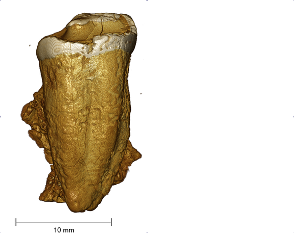 'Neanderthal' Remains Actually Medieval Human