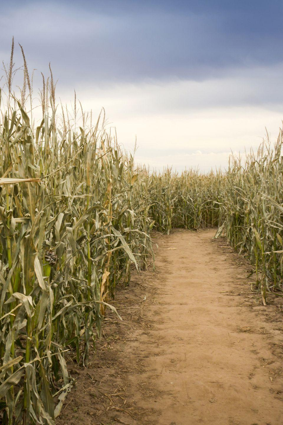 """<p>Get ready for some spooky fun at the <a href=""""https://www.newsalemcornmaze.com/"""" rel=""""nofollow noopener"""" target=""""_blank"""" data-ylk=""""slk:New Salem Corn Maze"""" class=""""link rapid-noclick-resp"""">New Salem Corn Maze</a> located in Dorr, Michigan. Teens and grown-ups can get their kicks by taking on their Haunted Corn Maze, Witches Wood adventure, or their Zombie Attack wagon ride. And for the family who wants a fun—not frightening—maze experience, stop by the <a href=""""https://go.redirectingat.com?id=74968X1596630&url=https%3A%2F%2Fwww.tripadvisor.com%2FTourism-g42256-Grand_Rapids_Kent_County_Michigan-Vacations.html&sref=https%3A%2F%2Fwww.countryliving.com%2Flife%2Ftravel%2Fg22717241%2Fcorn-maze-near-me%2F"""" rel=""""nofollow noopener"""" target=""""_blank"""" data-ylk=""""slk:Grand Rapids attraction"""" class=""""link rapid-noclick-resp"""">Grand Rapids attraction</a> and check out their kid-friendly Daytime Corn Maze. It all kicks off October 2.</p><p><a class=""""link rapid-noclick-resp"""" href=""""https://go.redirectingat.com?id=74968X1596630&url=https%3A%2F%2Fwww.tripadvisor.com%2FAttractions-g42144-Activities-Dorr_Allegan_County_Michigan.html&sref=https%3A%2F%2Fwww.countryliving.com%2Flife%2Ftravel%2Fg22717241%2Fcorn-maze-near-me%2F"""" rel=""""nofollow noopener"""" target=""""_blank"""" data-ylk=""""slk:PLAN YOUR TRIP"""">PLAN YOUR TRIP</a></p>"""