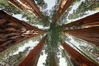 """<p>Get ready to feel tiny—<em>really </em>tiny—when you walk along the <a href=""""https://www.tripadvisor.com/Attraction_Review-g143050-d6650757-Reviews-Congress_Trail-Sequoia_and_Kings_Canyon_National_Park_California.html"""" rel=""""nofollow noopener"""" target=""""_blank"""" data-ylk=""""slk:Congress Trail"""" class=""""link rapid-noclick-resp"""">Congress Trail</a> and you're dwarfed by the giant Sequoias. The paved loop starts at the famed General Sherman Tree, the largest tree in the world.</p><p><a class=""""link rapid-noclick-resp"""" href=""""https://go.redirectingat.com?id=74968X1596630&url=https%3A%2F%2Fwww.tripadvisor.com%2FAttraction_Review-g143050-d6650757-Reviews-Congress_Trail-Sequoia_and_Kings_Canyon_National_Park_California.html&sref=https%3A%2F%2Fwww.countryliving.com%2Flife%2Ftravel%2Fg24487731%2Fbest-hikes-in-the-us%2F"""" rel=""""nofollow noopener"""" target=""""_blank"""" data-ylk=""""slk:PLAN YOUR HIKE"""">PLAN YOUR HIKE</a></p>"""