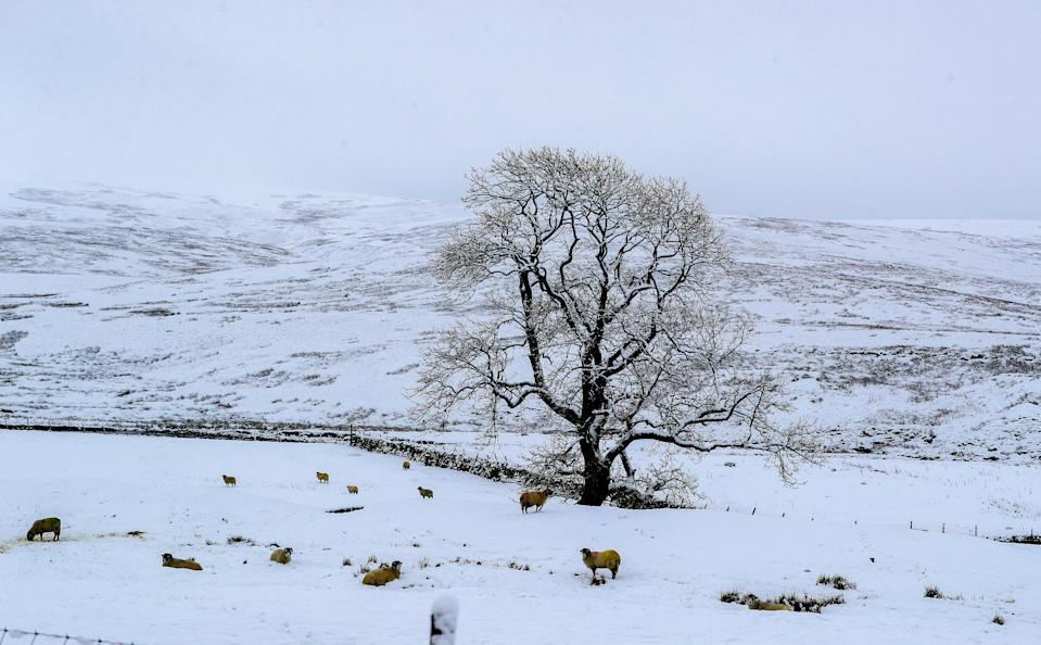 Snow covered trees at Newby Head, North Yorkshire, with the UK expecting more wintry weather ahead of the first weekend of December, with warnings in place for ice and snow.