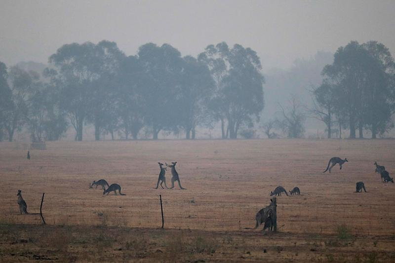 From Extreme Heat to Heavy Rain, 'Merry-go-round' Weather Poses New Risk for Fire-ravaged Australia
